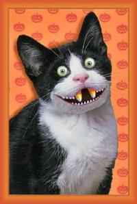Cat_candy_corn_fangs